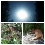 20200504_141531-COLLAGE